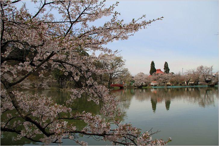 信州へバス旅行・・・・臥竜公園_a0256349_21431925.jpg