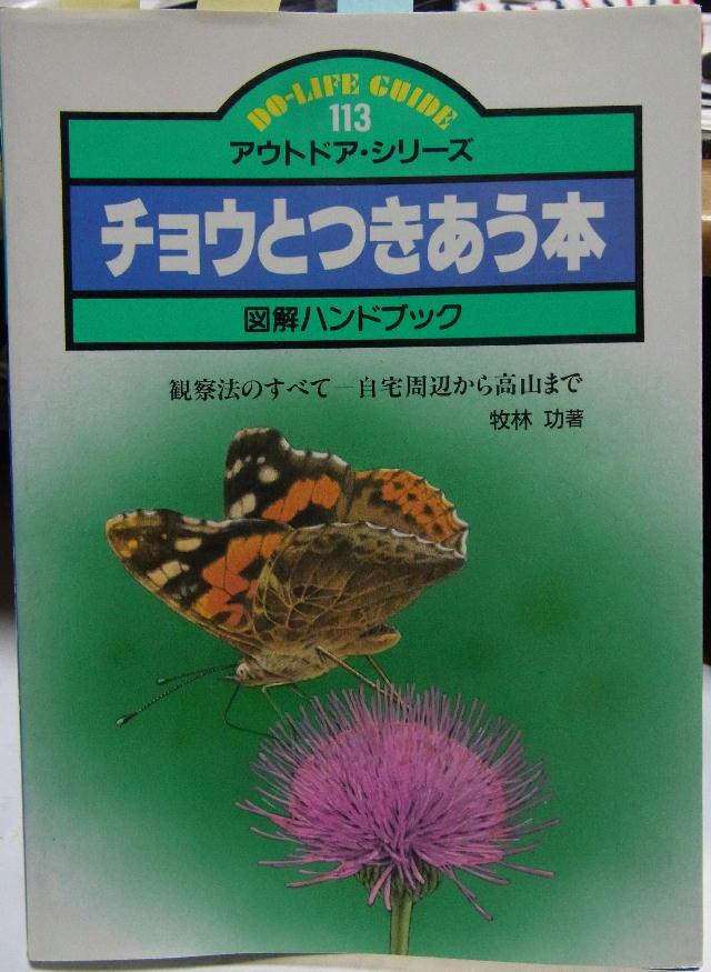 類似2☆ イチモンジチョウ × アサマイチモンジ  翅表比較図Ⅱ_a0146869_21572932.jpg
