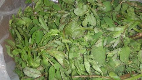 珍しい山菜「あずき菜」。_d0182179_1813870.jpg