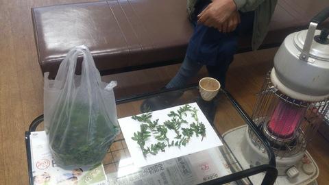 珍しい山菜「あずき菜」。_d0182179_18175230.jpg