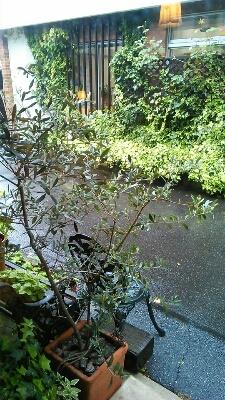 雨_a0059281_10591292.jpg