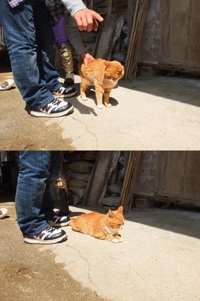 犬と猫とヒト 1_a0180681_16164831.jpg