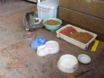 犬と猫とヒト 1_a0180681_16203648.jpg