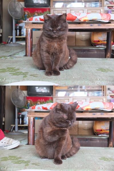 犬と猫とヒト 1_a0180681_16291853.jpg