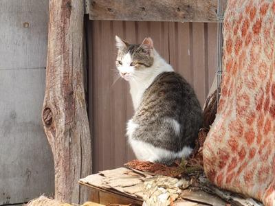 犬と猫とヒト 1_a0180681_16305942.jpg
