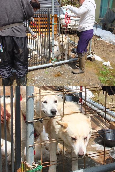 犬と猫とヒト 1_a0180681_16342124.jpg
