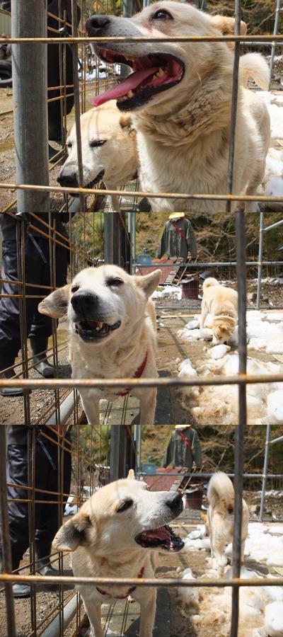 犬と猫とヒト 1_a0180681_16374664.jpg