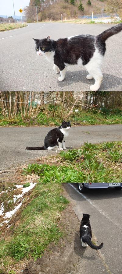 犬と猫とヒト 1_a0180681_164393.jpg
