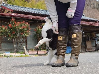 犬と猫とヒト 1_a0180681_16503216.jpg