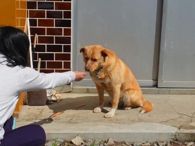 犬と猫とヒト 1_a0180681_1693684.jpg