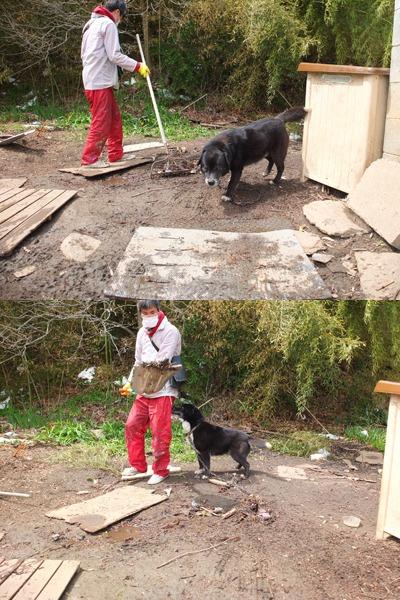 犬と猫とヒト 2_a0180681_1701134.jpg