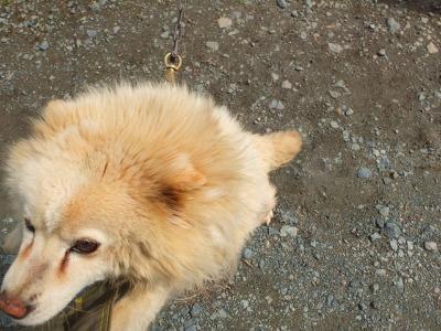 犬と猫とヒト 2_a0180681_17152974.jpg