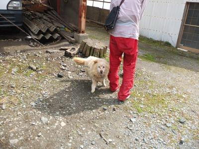 犬と猫とヒト 2_a0180681_17154538.jpg