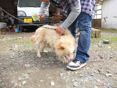 犬と猫とヒト 2_a0180681_17393877.jpg