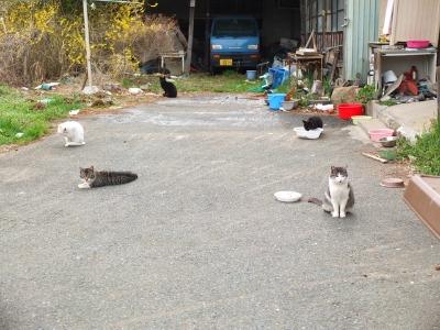 犬と猫とヒト 2_a0180681_17423393.jpg