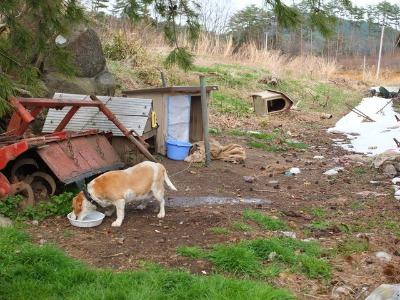 犬と猫とヒト 2_a0180681_17435313.jpg