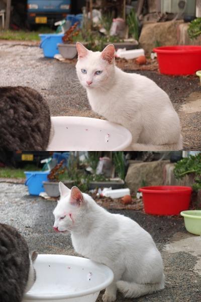 犬と猫とヒト 2_a0180681_17471358.jpg