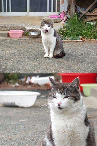 犬と猫とヒト 2_a0180681_17544813.jpg