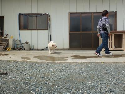 犬と猫とヒト 2_a0180681_1754592.jpg