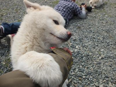 犬と猫とヒト 2_a0180681_177284.jpg