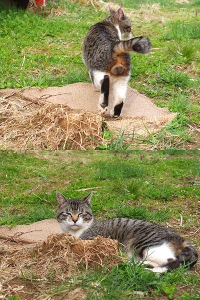 犬と猫とヒト 2_a0180681_1801548.jpg