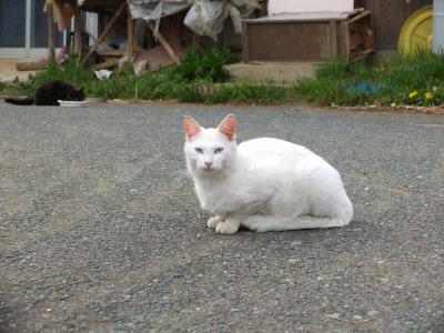 犬と猫とヒト 2_a0180681_182567.jpg