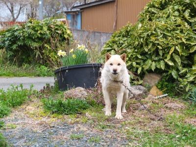 犬と猫とヒト 3_a0180681_1832156.jpg