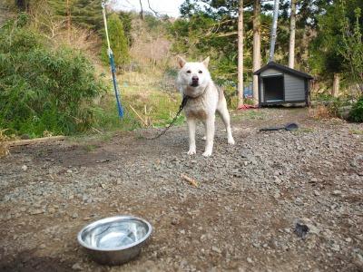 犬と猫とヒト 3_a0180681_183228100.jpg