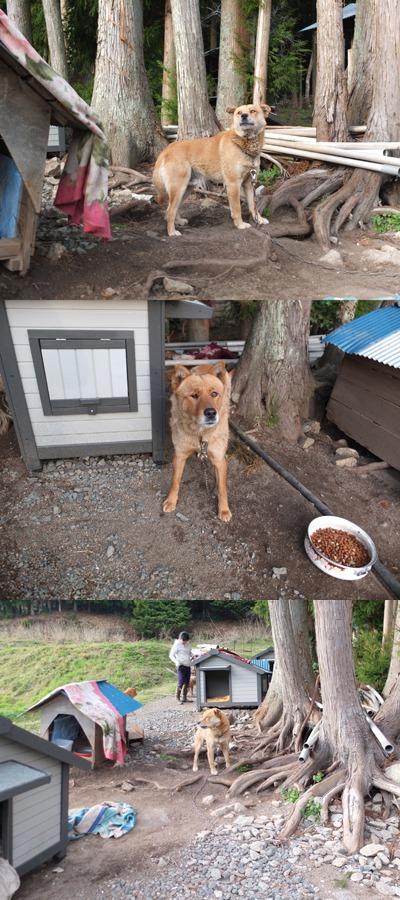 犬と猫とヒト 3_a0180681_18535622.jpg