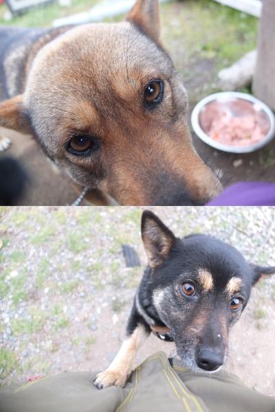 犬と猫とヒト 3_a0180681_18565844.jpg