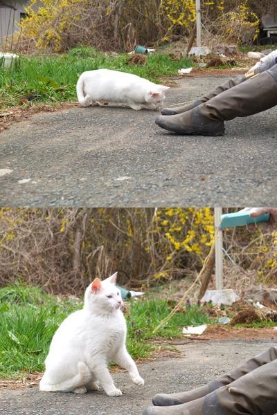 犬と猫とヒト 2_a0180681_185948.jpg