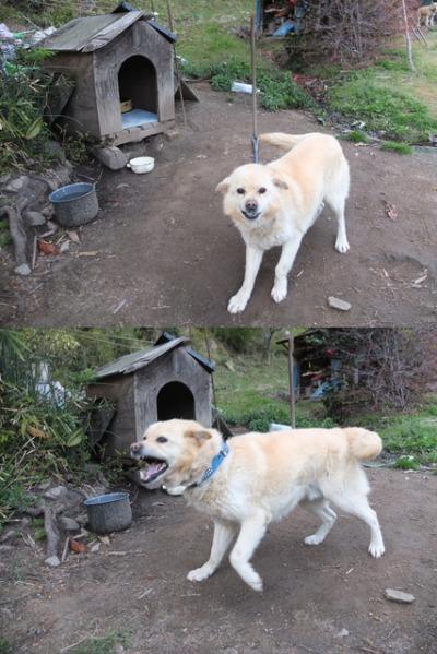 犬と猫とヒト 3_a0180681_19104915.jpg
