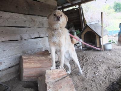 犬と猫とヒト 3_a0180681_1911429.jpg