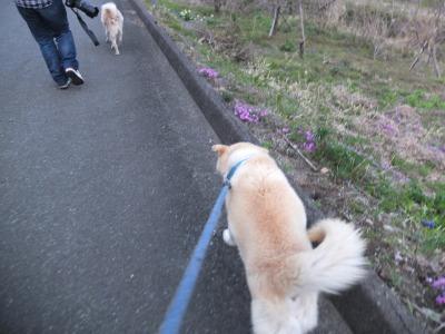 犬と猫とヒト 3_a0180681_19122611.jpg