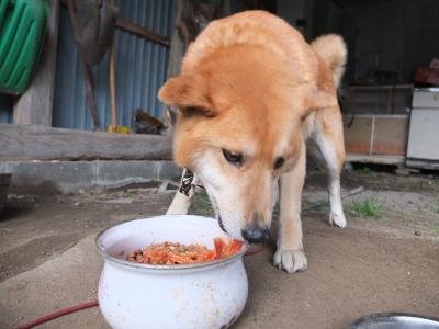 犬と猫とヒト 3_a0180681_1913765.jpg