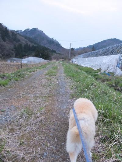 犬と猫とヒト 3_a0180681_19143164.jpg