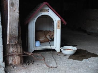 犬と猫とヒト 4_a0180681_19244513.jpg