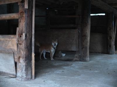 犬と猫とヒト 4_a0180681_19422124.jpg