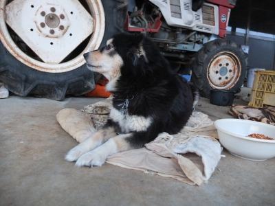 犬と猫とヒト 4_a0180681_19423698.jpg