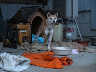 犬と猫とヒト 4_a0180681_19432442.jpg