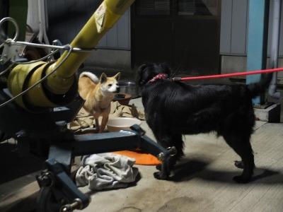 犬と猫とヒト 4_a0180681_19455239.jpg
