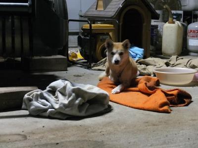 犬と猫とヒト 4_a0180681_19465573.jpg