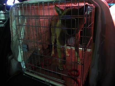 犬と猫とヒト 4_a0180681_19521663.jpg
