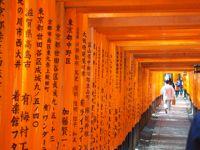 火曜サスペンス…行ってみたかったんだ…伏見稲荷…京都二番_d0266681_1554845.jpg