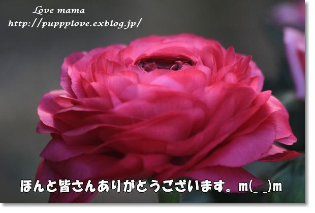 b0136683_943196.jpg