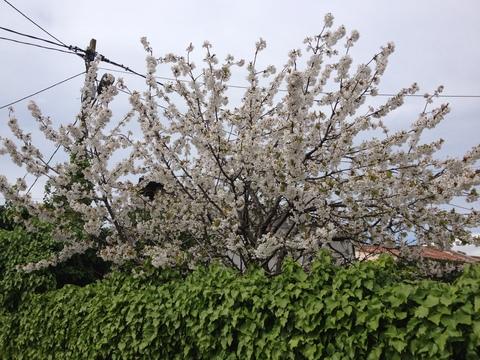 もう春でした_a0255206_1214954.jpg