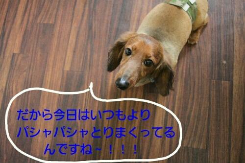 b0130018_15273226.jpg