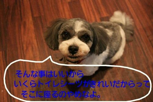 b0130018_21102694.jpg