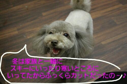 b0130018_2122161.jpg