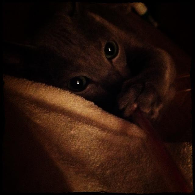 猫の手_e0132518_2194293.jpg